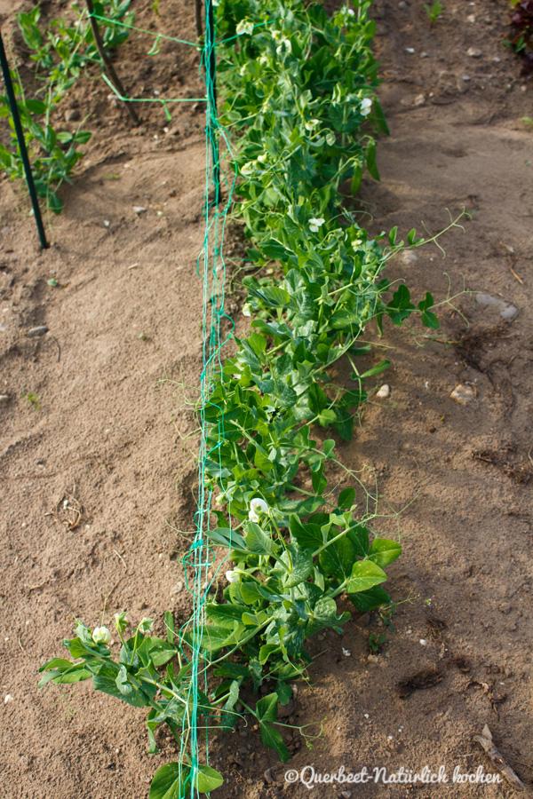 Querbeet-Natuerlichkochen.Erbsenpflanzen1