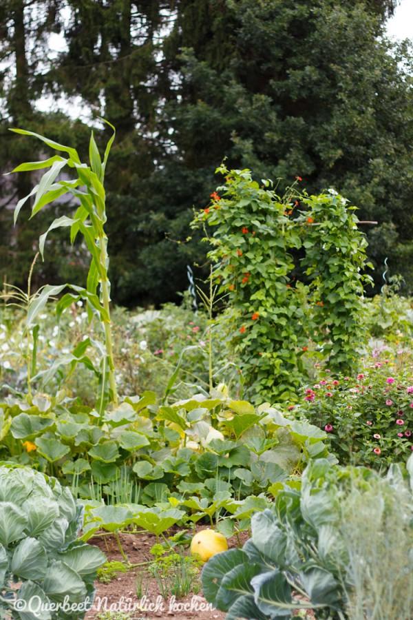 Gartenglück Parzellen 2.querbeetnatuerlichkochen