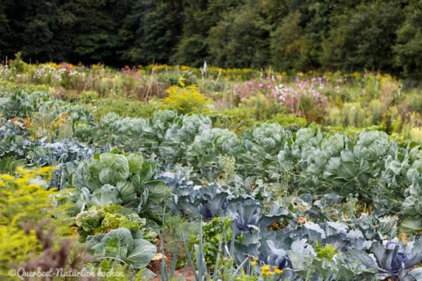 Gartenglück Parzellen.querbeetnatuerlichkochen