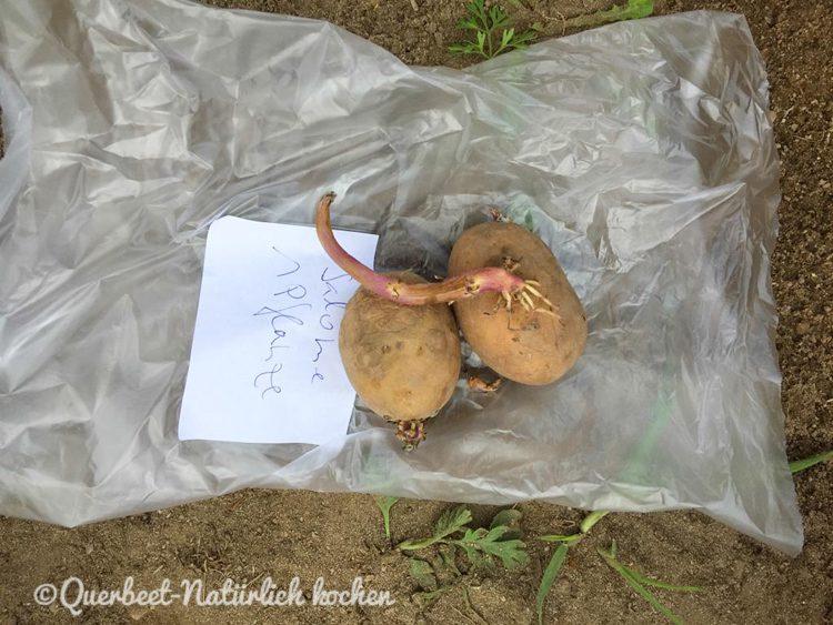 Gartenglueck2.15.Kartoffeln.querbeetnatuerlichkochen