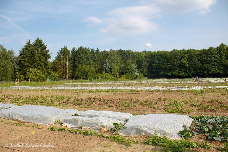 Gartenglueck2.2.Garten.querbeetnatuerlichkochen