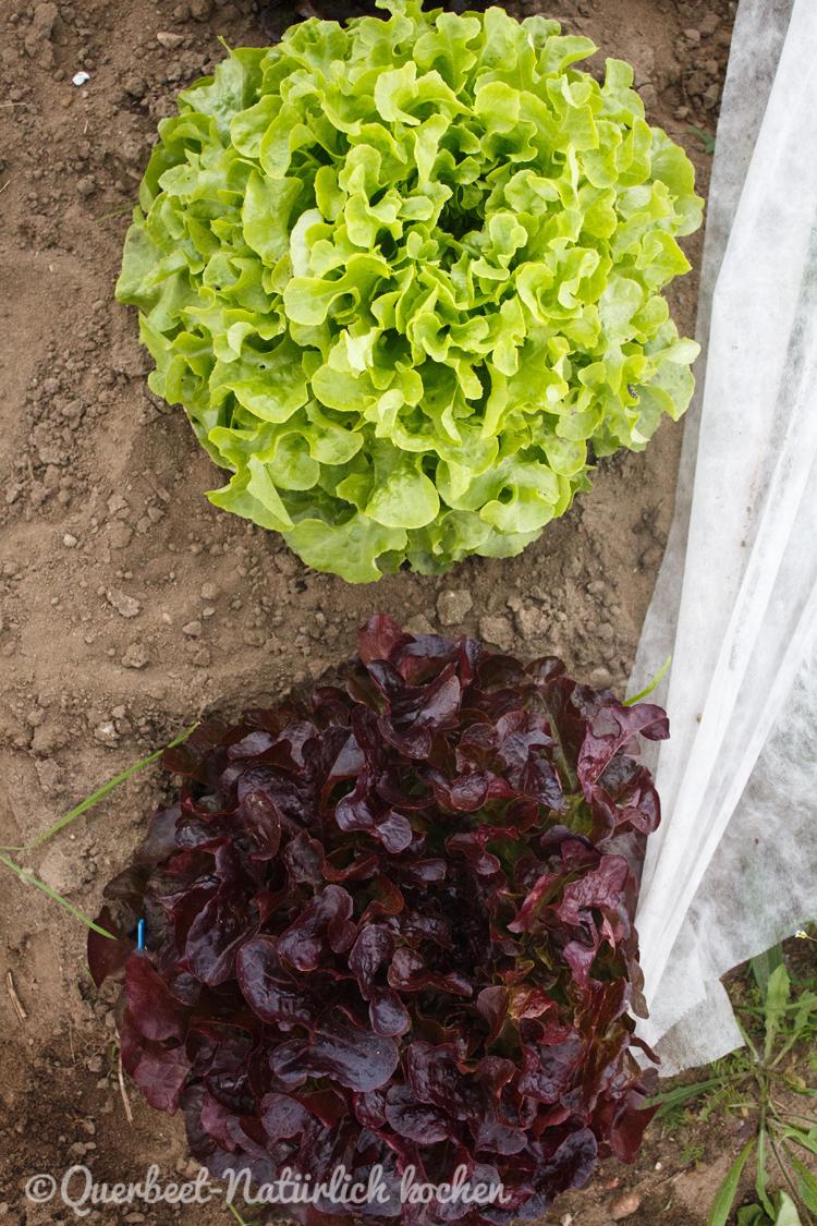 Gartenglueck2.28.Salat.querbeetnatuerlichkochen