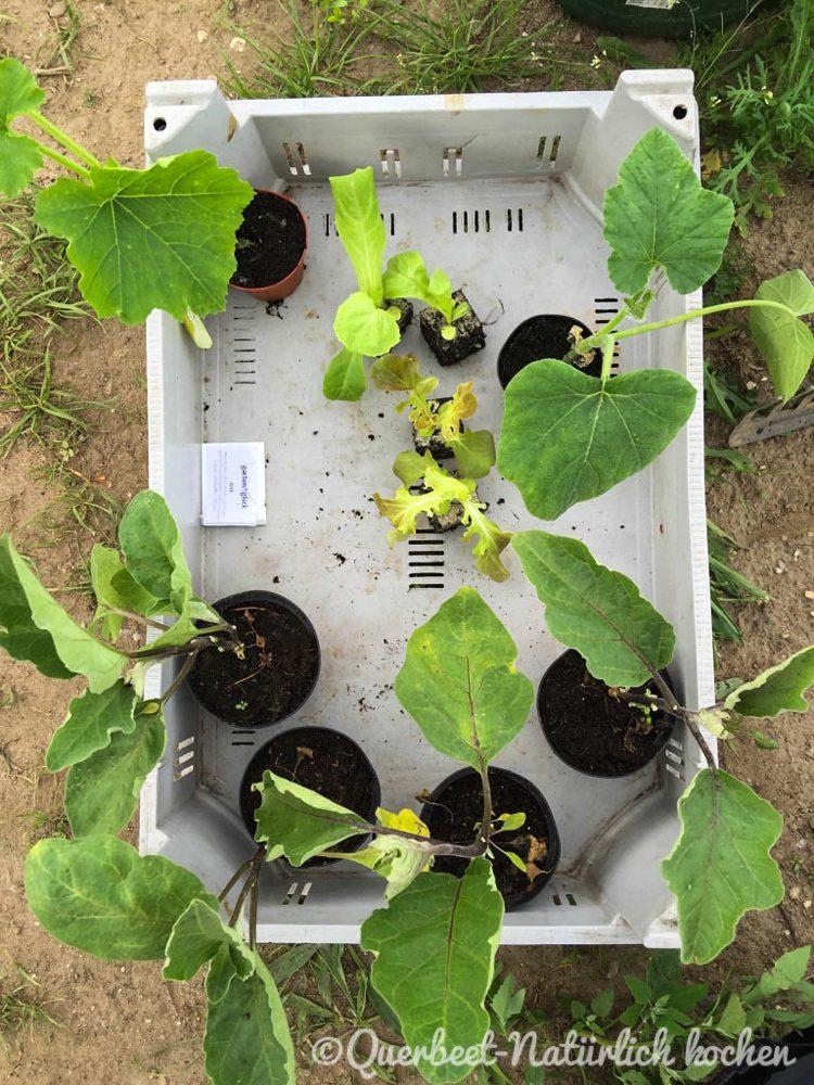 Gartenglueck2.29.Gemüse.querbeetnatuerlichkochen