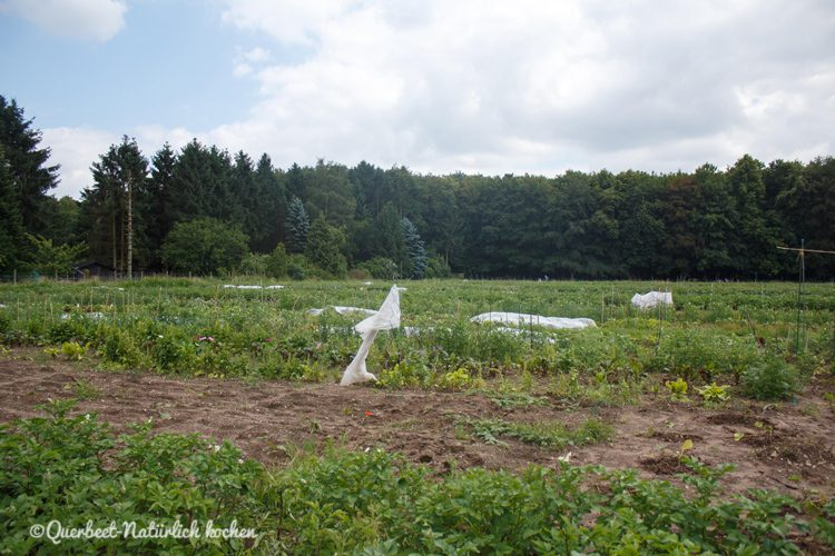 Gartenglueck2.41.Garten.querbeetnatuerlichkochen