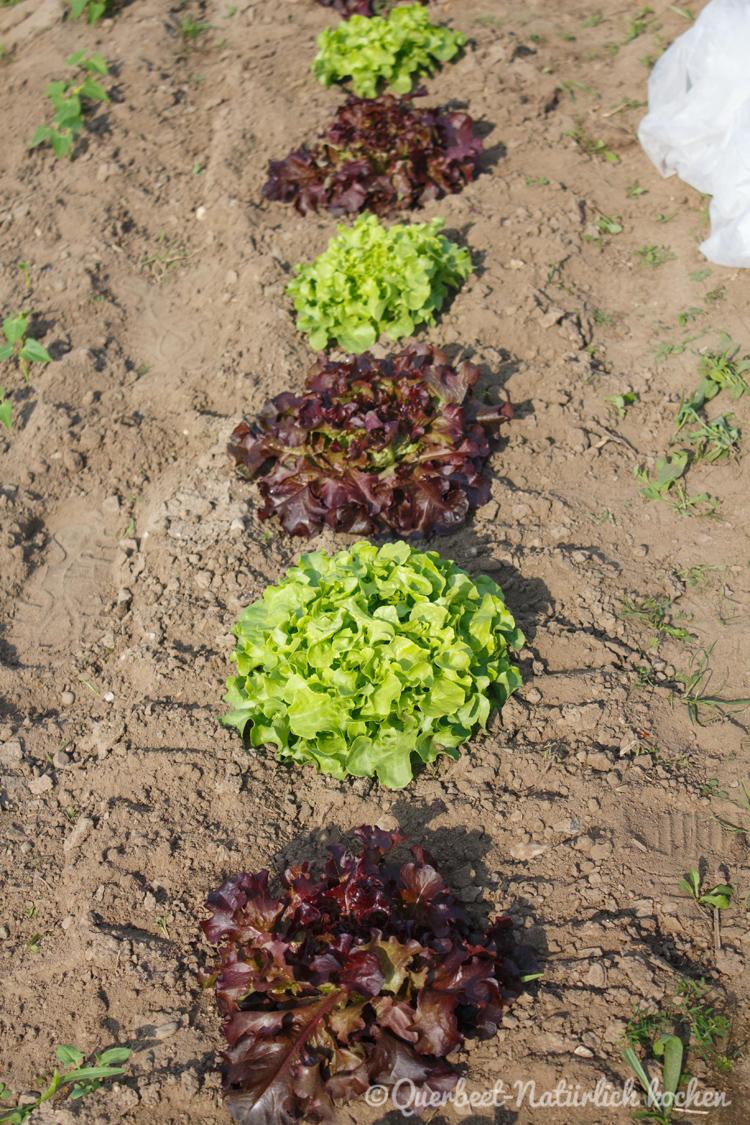 Gartenglueck2.9.Salat.querbeetnatuerlichkochen